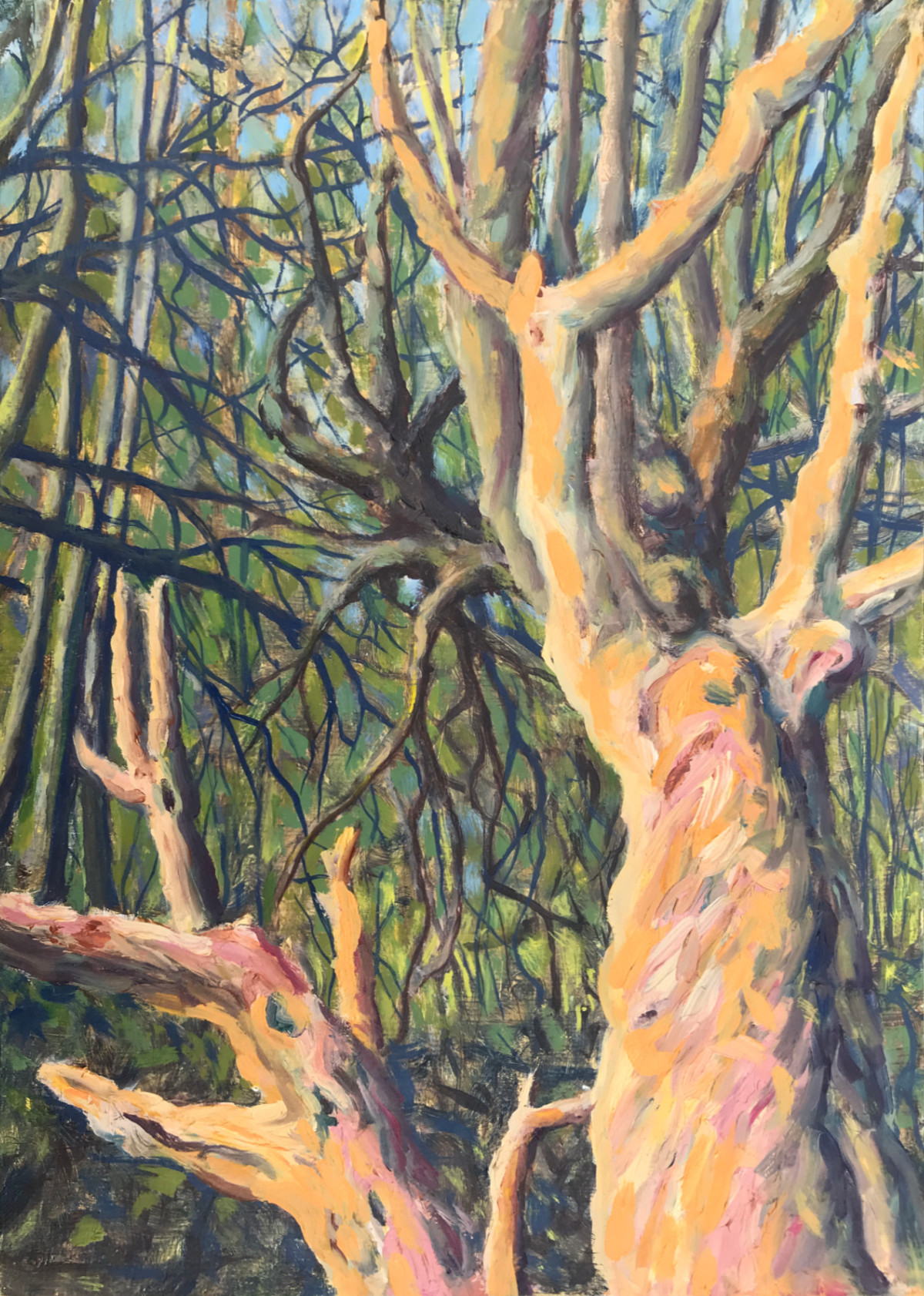 The Old Tree oil sketch
