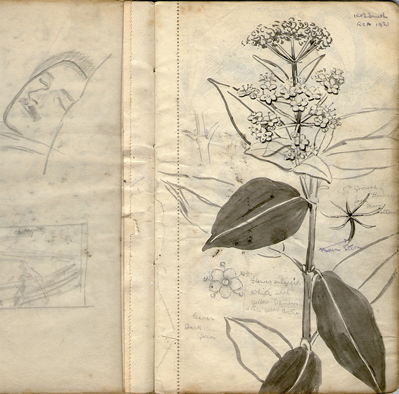 Plant study by Kenneth Baldwin-Smith