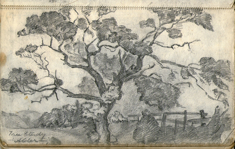 Tree study by Kenneth Baldwin-Smith